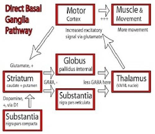 759241 - جزوه کنترل سیستم های عصبی عضلانی دکتر هاشمی گلپایگانی (دانشگاه امیرکبیر)